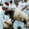 Samaritans_sacrifice_lamb