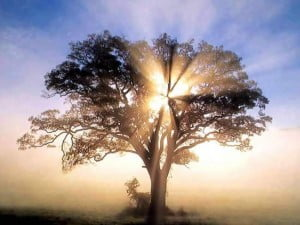 light_shining_through_tree