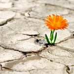 Can leaders be truly vulnerable?