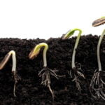The seed of the kingdom grows 'all by itself' in Mark 4